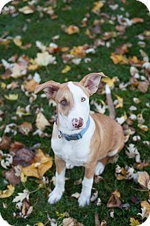 Hound (Unknown Type) Mix Dog for adoption in Dayton, Ohio - Lucky