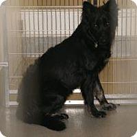 Adopt A Pet :: Harley - Wildomar, CA