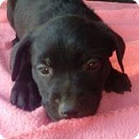 Adopt A Pet :: Demi - Dana Point, CA