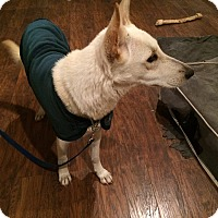 Adopt A Pet :: BELL - SAN ANTONIO, TX