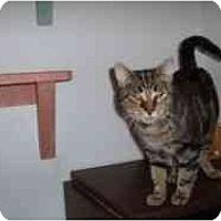 Adopt A Pet :: Mackie - Hamburg, NY