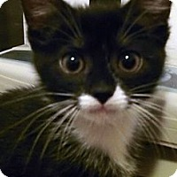Adopt A Pet :: Farrah - Irvine, CA