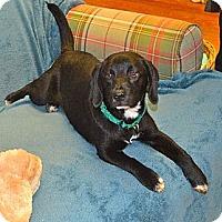 Adopt A Pet :: Copper - Homewood, AL