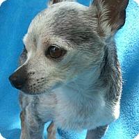 Adopt A Pet :: Louie - Lansing, MI
