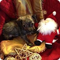 Adopt A Pet :: Christopher - Henderson, NV