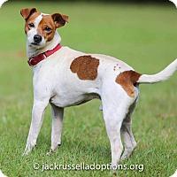Adopt A Pet :: Flash - Conyers, GA