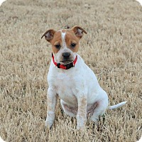 Adopt A Pet :: Sunshine - Hagerstown, MD