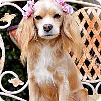 Adopt A Pet :: Spring - Irvine, CA
