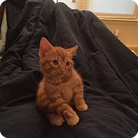 Adopt A Pet :: Jose - Hampton, VA