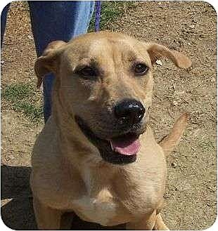 Labrador Retriever/Rhodesian Ridgeback Mix Dog for adoption in Odenville, Alabama - Autumn