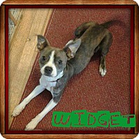 Adopt A Pet :: Widget - Garden City, MI