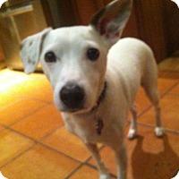 Adopt A Pet :: Mackey - Bernardston, MA