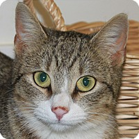Adopt A Pet :: Angie - North Branford, CT