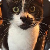 Adopt A Pet :: Mason - Davison, MI