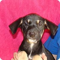 Adopt A Pet :: Marigold - Oviedo, FL