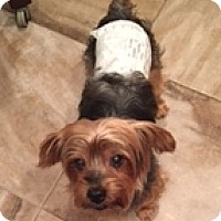 Adopt A Pet :: Luckie Duck - N. Babylon, NY