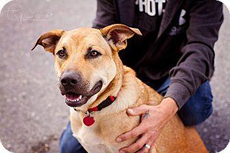 Shepherd (Unknown Type) Mix Dog for adoption in Springfield, Missouri - Sadie Dawn