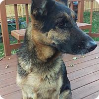 Adopt A Pet :: ZOA - Rudy - Aurora, IL