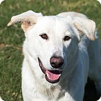 Adopt A Pet :: Ginny - Walnut Creek, CA