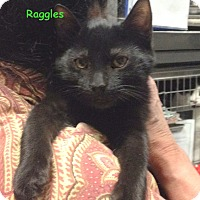 Adopt A Pet :: RAGGLES - Cliffside Park, NJ