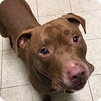 Adopt A Pet :: Rudy - Cleveland, OH