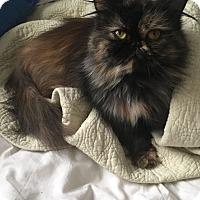 Adopt A Pet :: Priscilla - Hampton, VA