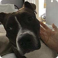 Adopt A Pet :: Midge - Frankfort, IL