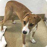 Adopt A Pet :: Donna - Miami, FL