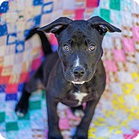 Adopt A Pet :: Rose - Atlanta, GA
