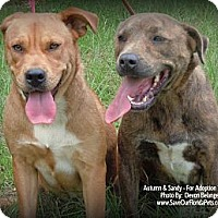 Adopt A Pet :: Autumn & Sandy - Eustis, FL