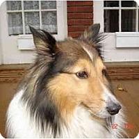 Adopt A Pet :: Maxi - Rigaud, QC