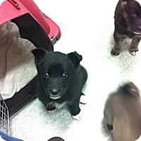 Adopt A Pet :: Ricky - Saskatoon, SK