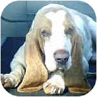 Adopt A Pet :: Jack - Phoenix, AZ