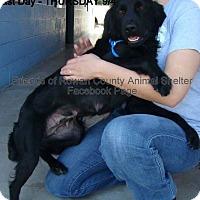 Adopt A Pet :: Elaine - Bardonia, NY