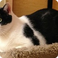 Adopt A Pet :: Colvin - McHenry, IL