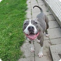 Adopt A Pet :: Fiona - Lake Odessa, MI