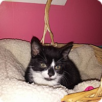 Adopt A Pet :: James Dean - Fayette City, PA