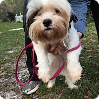 Adopt A Pet :: Cookie - Daleville, AL
