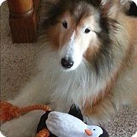 Adopt A Pet :: Sebastian - Circle Pines, MN