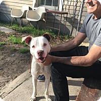 Adopt A Pet :: Toby - New Orleans, LA