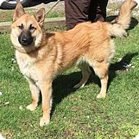 Adopt A Pet :: SIR LANCELOT - Cadiz, OH