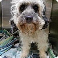 Adopt A Pet :: Toby - Miami, FL