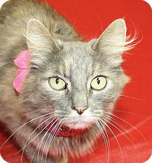 Domestic Mediumhair Cat for adoption in Jackson, Michigan - Loretta