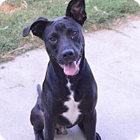 Adopt A Pet :: Emmitt - Bowie, TX