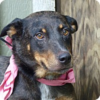 Cattle Dog Mix Dog for adoption in Baton Rouge, Louisiana - Gidget