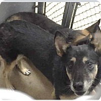 Adopt A Pet :: Daisy - Victorville, CA
