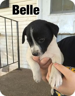 Cattle Dog Mix Puppy for adoption in Union Grove, Wisconsin - Belle