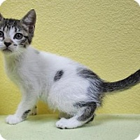 Adopt A Pet :: Connie - Benbrook, TX