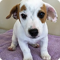 Adopt A Pet :: ADOPTED!!!   Wishbone - Gahanna, OH