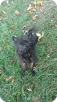 Terrier (Unknown Type, Medium) Mix Dog for adoption in Frederick, Maryland - Cahla